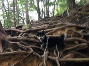 愛犬 リキと金華山